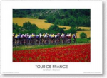 Poppy Fields of the Tour de France Poster